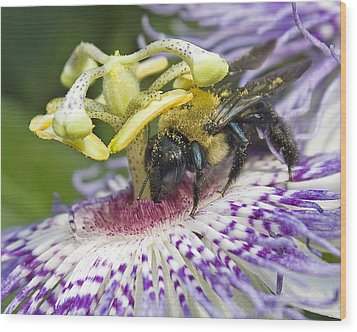 Bee At Work Wood Print by Alan Raasch
