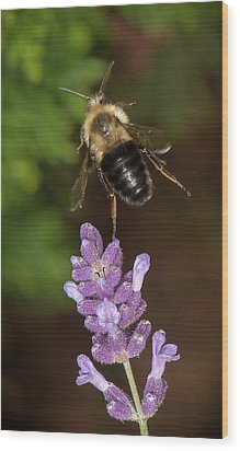 Bee Ballet Wood Print by Len Romanick