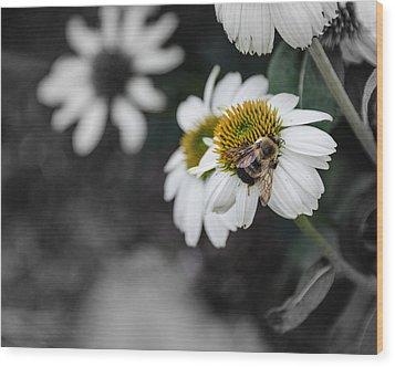 Bee Daisied Wood Print