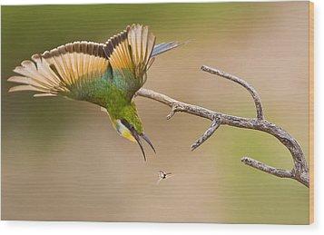Bee-eater Wood Print by Basie Van Zyl