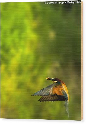 Bee Eater Wood Print
