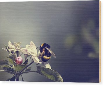 Bee Happy Wood Print by Gabriel Calahorra