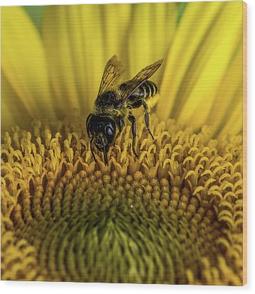 Wood Print featuring the photograph Bee In A Sunflower by Paul Freidlund
