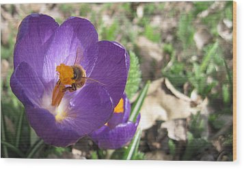 Bee In Purple Flower Wood Print by Luke Cain