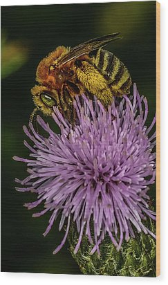 Wood Print featuring the photograph Bee On A Thistle by Paul Freidlund