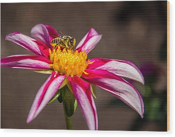 Bee On Dahlia Wood Print