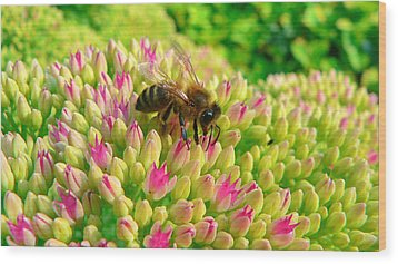 Wood Print featuring the photograph Bee On Flower by Larry Keahey