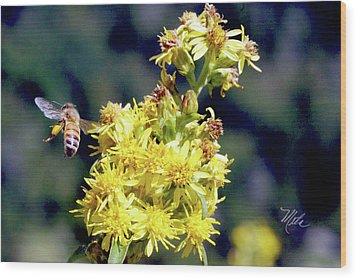 Bee On Goldenrod Wood Print