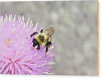 Bee On Pink Bull Thistle Wood Print