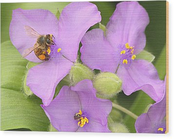 Wood Print featuring the photograph Bee On Purple Spiderwort by Sheila Brown