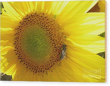 Wood Print featuring the photograph Bee On Sunflower by Jean Bernard Roussilhe