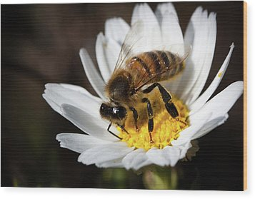 Bee On The Flower Wood Print
