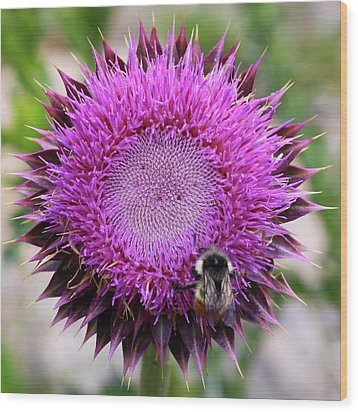 Wood Print featuring the photograph Bee On Thistle by David Chandler