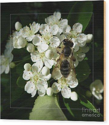 Bee On White Flowers 2 Wood Print by Jean Bernard Roussilhe