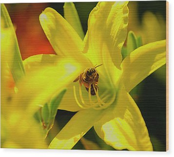 Bee On Yellow Lilly Wood Print