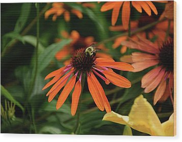 Bee Pollinating On A Cone Flower Wood Print