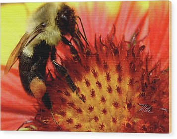 Bee Red Flower Wood Print