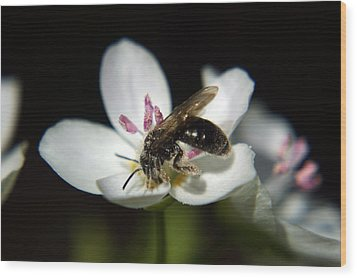 Bee Still Wood Print by Off The Beaten Path Photography - Andrew Alexander