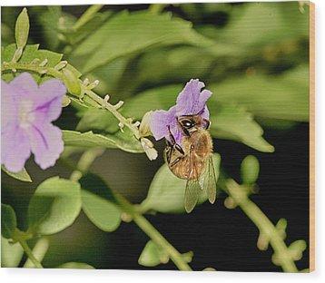 Bee Taking Pollen Wood Print