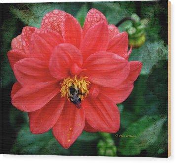 Wood Print featuring the photograph Bee-utiful by Joan Bertucci