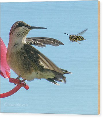 Bee_bird Wood Print