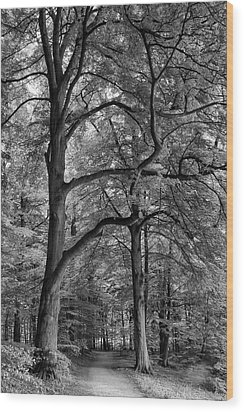 Beech Forest - 365-222 Wood Print by Inge Riis McDonald