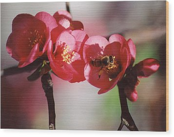 Beeing Pretty Busy Wood Print by Jan Amiss Photography
