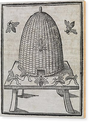 Bees And Beehive, 17th Century Artwork Wood Print by Middle Temple Library
