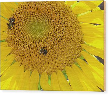 Wood Print featuring the photograph Bees Share A Sunflower by Sandi OReilly