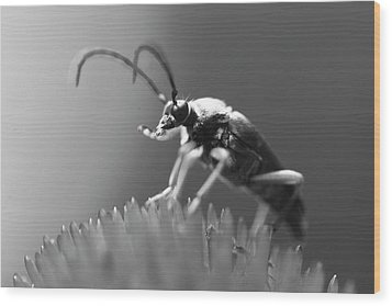 Beetle In Black And White Wood Print by Brian Magnier