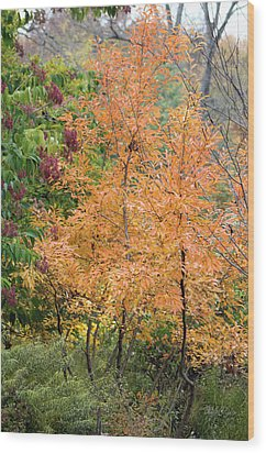 Wood Print featuring the photograph Before The Fall by Deborah  Crew-Johnson