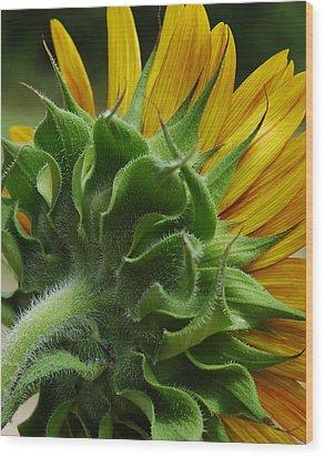 Behind The Sun-flower Wood Print by Lori Mellen-Pagliaro