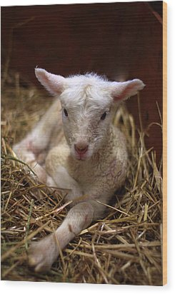 Behold The Lamb Wood Print by Linda Mishler
