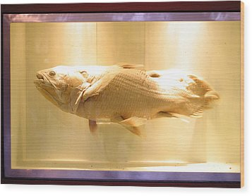Beige Fish Wood Print by Jez C Self