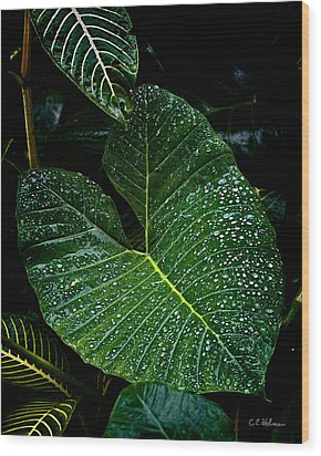 Bejeweled Leaf Wood Print by Christopher Holmes
