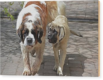 Bell And Maya Wood Print by Susie Fisher