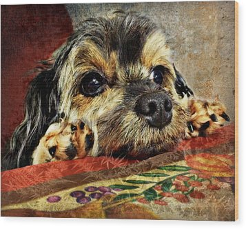 Bella's Thanksgiving Wood Print by Kathy M Krause