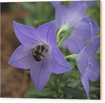 Wood Print featuring the photograph Bellflower And Bee  by Marie Hicks