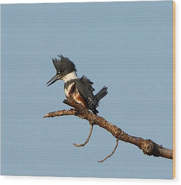 Wood Print featuring the photograph Belted Kingfisher  by Barbara Bowen