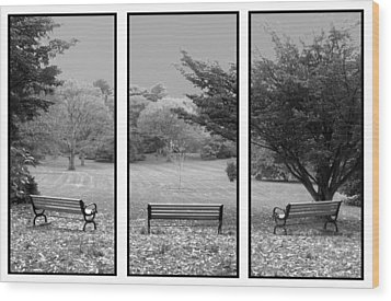 Bench View Triptic Wood Print by Tom Romeo