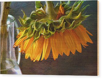 Wood Print featuring the photograph Bending  Sunflower by John Rivera