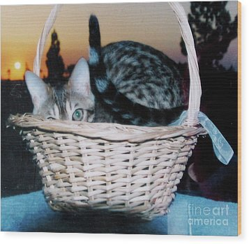 Wood Print featuring the photograph Bengal Cat At Sunset by Phyllis Kaltenbach