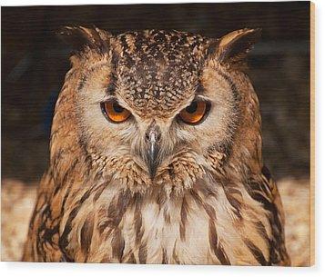 Bengal Owl Wood Print