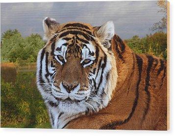 Bengal Tiger Portrait Wood Print