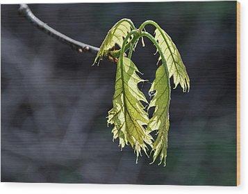 Bent On Growing - Wood Print