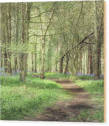 Bentley Woods, Warwickshire #landscape Wood Print