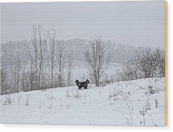 Wood Print featuring the photograph Bernes Mountain Dog In Snow by Charline Xia