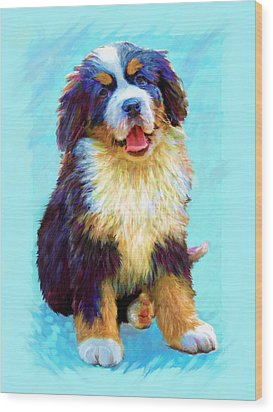 Bernese Mountain Dog Wood Print by Jane Schnetlage