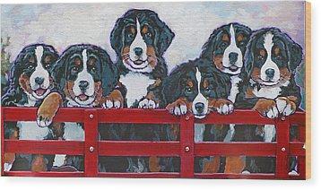 Bernese Mountain Dog Puppies Wood Print
