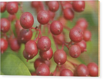 Wood Print featuring the photograph Berries by Heidi Poulin